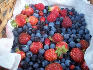 A handful of summer berries
