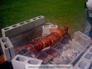 Pig on the spit