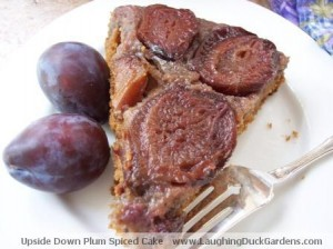 A Slice of Upside Down Plum Spiced Cake