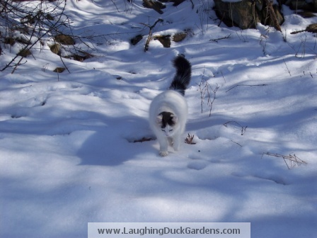 chickchick-in-the-snow