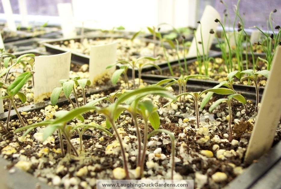 seedling-2009-03-065