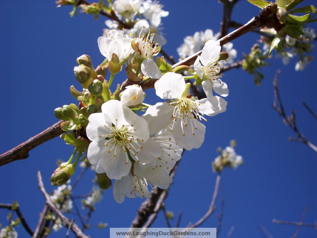 2009-04-04-cherry-on-top-23