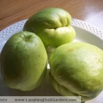 chayote-on-plate