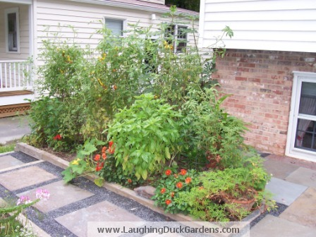 front-veg-garden-sept-2003