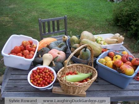 garden-of-the-americas-2008-08-27-harvest