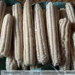 hickory-king-corn-dry-ears