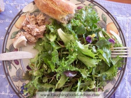 salad-2009-04-005