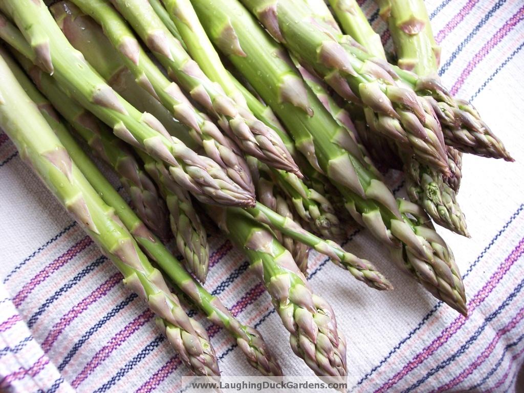 asparagus-2009-04-006