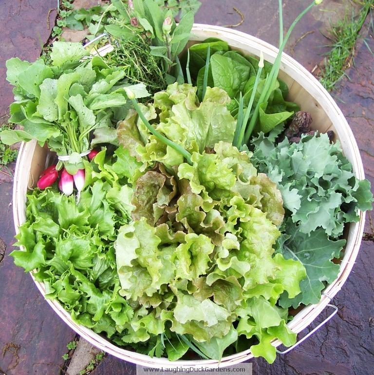 garden-basket-2009-05-04-003