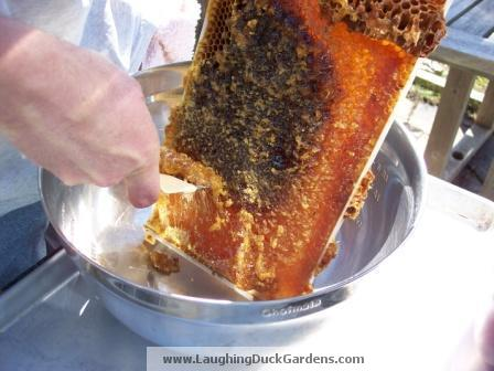 harvesting-honey-010
