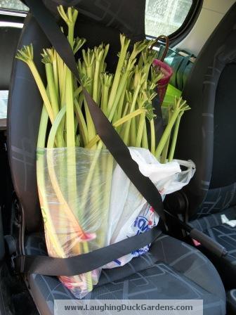 rhubarb-008-traveling
