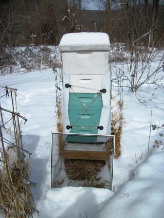 hive winter wrap 007