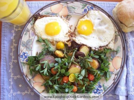 Sunnyside eggs with purslane, blue potato & cherry tomato salad