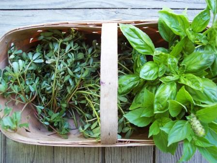 Basil & purslane both like hot summer weather