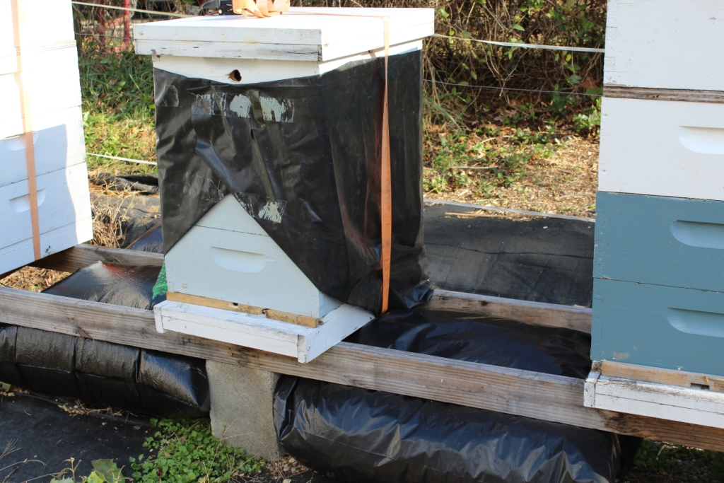 This is a weak colony I wrapped in November.  As it is light on bees and stores (only 2 mediums), it got early protection and prolonged access to 2:1 feed.