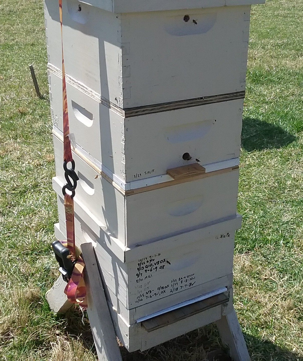 Hive notes on a split colony